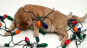 cat-tangled-in-christmas-light